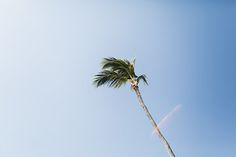 Photo collection by Karina Jensen Photography Punta Cana, Wind Turbine, Beautiful Places, Plants, Photography, Image, Photograph, Flora, Photo Shoot