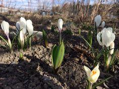 Spring is here! Spring Is Here, Nature, Naturaleza, Nature Illustration, Off Grid, Natural