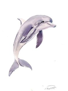 Dolphin Painting, original watercolor painting, 12 X 9 in, sea world animal art by ORIGINALONLY on Etsy