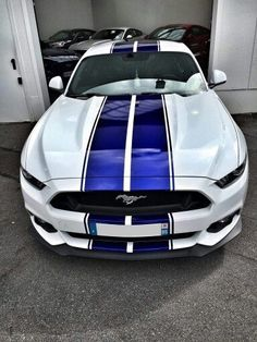 the only thing wrong with this car is that it is not a Shelby. I want a Shelby with this paint setup the only thing wrong with this car is that it is not a Shelby. I want a Shelby with this paint setup 2018 Mustang Gt, Ford Mustang Shelby Gt500, Mustang Cars, Fort Mustang, Autos Ford, Bmw Autos, Pontiac Gto, Chevrolet Corvette, Automobile