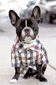 Fall Plaid Water Resistant Button Down Dog Shirt by Dog Threads
