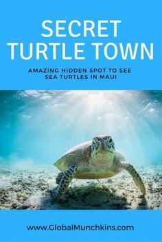 I've discovered a Hidden Gem, [the Secret, No Snorkel] Turtle Town Maui Secret spot to see sea turtles- Turtle Town Maui Hawaii Maui, Lahaina Maui, Kaanapali Maui, Hawaii Life, Honeymoon Vacations, Hawaii Honeymoon, Romantic Vacations, Family Vacations, Romantic Travel