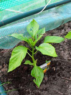 Selber-Macherin: Schnecken-Ex! Wie ihr euer Gemüse vor gefräßigen Schnecken retten könnt