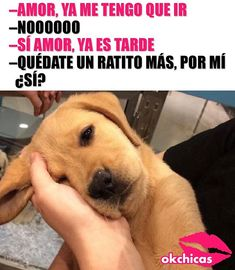 Funny Dogs, Wtf Funny, Funny Animals, Animals And Pets, Cute Animals, Hilarious, Memes Chistosisimos, Funny Memes, Chiste Meme