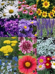 15 Fast Growing Flowers for a Cutting Garden Gardens Spring and