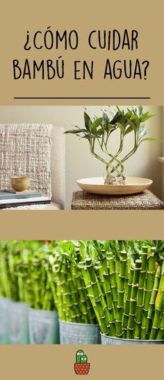 Eco Garden, Garden Plants, Home And Garden, Best Indoor Plants, My Secret Garden, Naturally Beautiful, Plant Care, Go Green, Feng Shui