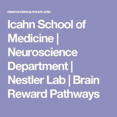 Icahn School of Medicine   Neuroscience Department   Nestler Lab   Brain Reward Pathways