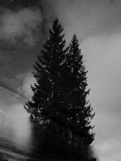 """""""Winter ligh"""""""