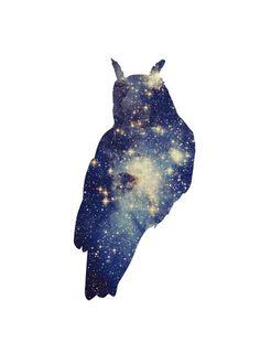 'The Stellar Owl' by Julia Williams