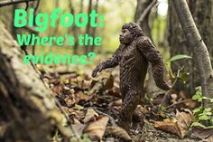 Most people think that Bigfoot, or Sasquatch, is an interesting part of folklore, but does not really exist.  Some people, however, say they have evidence that Bigfoot exists.
