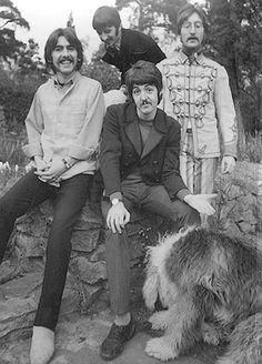 Beatles George Harrison, Ringo Starr, John Lennon and Paul McCartney with Paul's sheepdog Martha. Foto Beatles, Beatles Love, Les Beatles, Beatles Photos, John Lennon Beatles, Beatles Bible, Beatles Guitar, Beatles Band, Ringo Starr