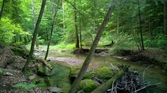 Indian Creek at Red River Gorge