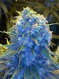 Mmmmarijuana.