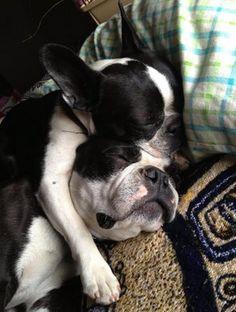 Bostie cuddling