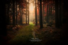 BROCELIANDE - FOREST CALL by Philippe MANGUIN, via 500px