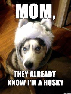 Husky in a Husky Hat