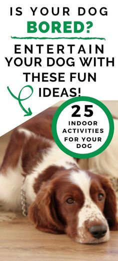 25 Fun Indoor Activities For Dogs - Tutor Your Dog Brain Games For Dogs, Dog Games, Fun Indoor Activities, Dog Activities, Dog House Air Conditioner, Dog Enrichment, Cool Dog Houses, Best Dog Food, Best Dog Breeds