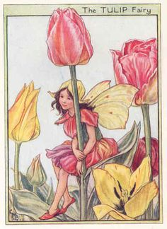 artist flower fairies - Google Search