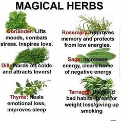 See what you can do with some common herbs!ie/intuition-tests/magic-herbs. Healing Herbs, Medicinal Plants, Natural Healing, Healing Spells, Aromatic Herbs, Magic Spells, Holistic Healing, Magic Herbs, Herbal Magic