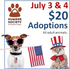 This 4th of July holiday why not add a new furry friend to your family? Stop by the shelter Friday AND Saturday for $20 adoptions on July 3 & 4 ONLY! Hurry on down. We have some great animals in this building for you to meet