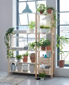 Perfekt IKEA Deutschland   Pflanzen Lassen Sich Wunderbar In Wasser Ziehen. Dafür  Brauchst Du Lediglich Wasser