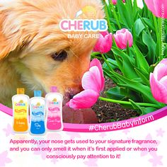Friendly reminder: do not over-spritz for the sake of those around you! Cherub Baby, Happy Sun, Baby Care, Dog Food Recipes, Fragrance, Dog Recipes, Perfume, Newborn Care