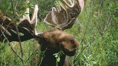 Wyoming Wildlife Viewing