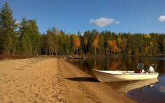 Vibrantly coloured autumn foliage at Lake Miekojärvi in Pello, Western Lapland - Travel Pello - Lapland, Finland Lapland Finland, Big Lake, Arctic Circle, Best Fishing, Westerns, Most Beautiful, Autumn, River, Outdoor