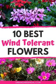 Wind tolerant flowers are perfect for exposed, windy gardens. Here are 10 beautiful flowers that can withstand wind.