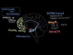 ▶ Behavioral effects of stress - YouTube