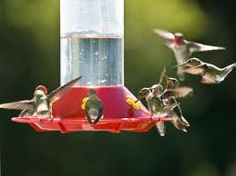 Image result for hummingbirds feeders