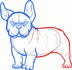 How to draw French bulldog