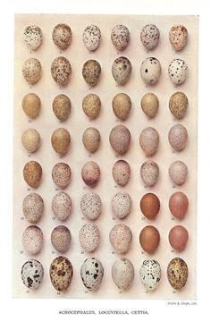 Speckled eggs bring thoughts of Spring ~