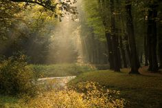 Fairy Tale Forest  By Paul Beentjes★