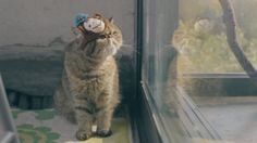 MailChimp Monkey Hats (For Cats) on Vimeo
