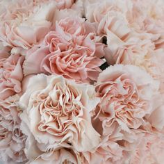 With soft and delicate features and long lasting longevity, carnations are a perfect fit to add into your dream bridal bouquet! Carnation Bouquet, Pink Carnations, Carnation Colors, Carnation Centerpieces, Wedding Centerpieces, Magenta Wedding, White Wedding Flowers, Wildflowers Wedding, Light Pink Flowers