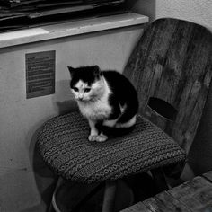 Picture, animals, cat, chair  //   bwstock.photography/animals.html