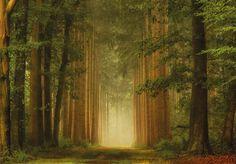 Birch Lane — Lars van de Goor