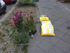 Auf geht's mit frischer Blumenerde Urban Gardening, Potting Soil, Fresh, Apartment Gardening, Urban Homesteading