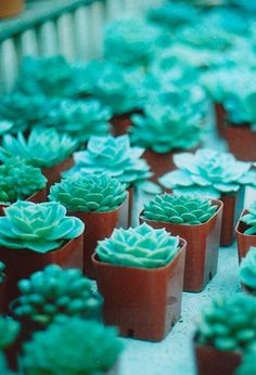 Succulents...'chicks & hens', grow well in dry hot climates, transplant in early Spring for shoots to form and 'chicks' will follow in appox. 4-5 wks after. Water sparingly thereafter.