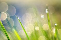 In photography, bokeh is the blur, or the aesthetic quality of the blur, in out-of-focus areas of an image.