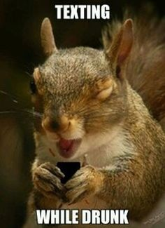 Hilarious Pictures of the day -65 pics- Texting While Drunk Squirrel