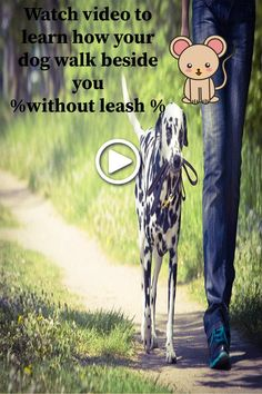 dog leash training is easy and amazing when dog learn to walk beside you without leash holder diy Leash Training, Dog Training Videos, Training Your Dog, Funny Dog Videos, Funny Dogs, Dog Commands, Compilation Videos, Dog Quotes, Dog Leash