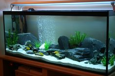 Historically saltwater aquarium owners have shied away from reefs. No one could understand why when these coral reefs were put into an aquarium the reef had a Cichlid Aquarium, Aquarium Aquascape, Saltwater Aquarium Setup, Goldfish Aquarium, Goldfish Tank, Tropical Fish Aquarium, Tropical Fish Tanks, Nature Aquarium, Aquarium Fish Tank