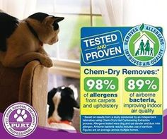 #cata #dogs #carpetcleaning #alergy #allergyseason #carlsbad #bnkchemdry #oceanside #vista #fallbrook #ranchosantafe #delmar #ranchosantafelocals #sandiegoconnection #sdlocals #rsflocals - posted by BnK Chem-Dry  https://www.instagram.com/bnkchemdry. See more post on Rancho Santa Fe at http://ranchosantafelocals.com