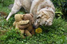 KramBam und ein Freund - äähhh Pardon, mit zwei Freunden! Der neugierige Hund ist übrigens Michel, unser vierbeiniger Foto-Assistent. Er kontrolliert die korrekte Pose unserer Teddybär-Modells.  Hier das endgültige Foto: http://pinterest.com/pin/183521753535735495/