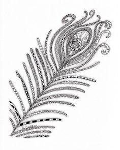 Peacock Feather Drawing  - Peacock Feather Fine Art Print