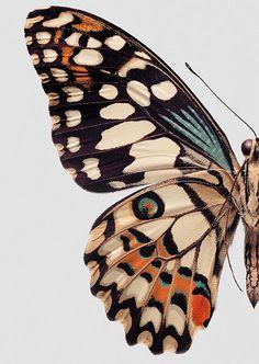 Письмо «Рекомендуемые Пины на тему «Природа»» — Pinterest — Яндекс.Почта
