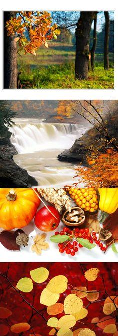 *** Autumn colors ***