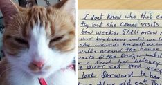 Cat Returns Home With A Note Revealing She Has A Secret Family | Bored Panda